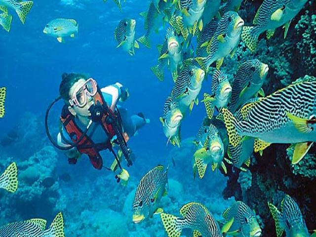 diving_in_thailand_0.jpg